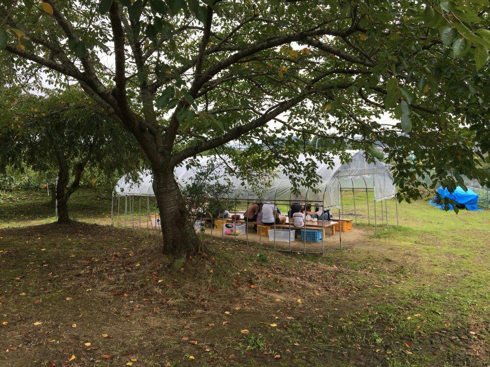 梨の試食スペース