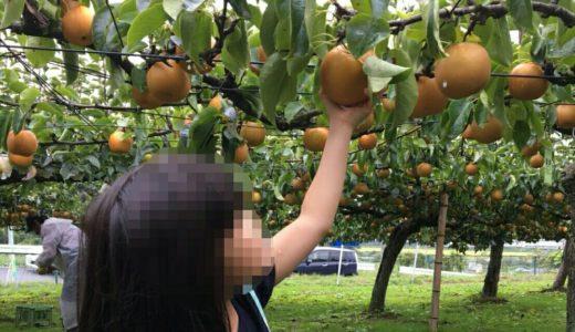 【体験レポート】利府町で梨狩り&食べ比べ|観光協会観光梨園