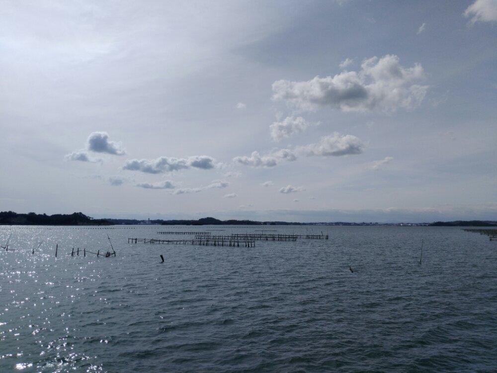 松島湾 牡蠣の養殖