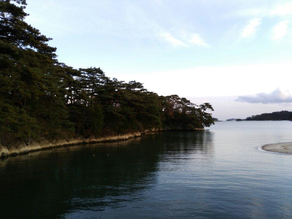 松島湾を泳ぐ鴨