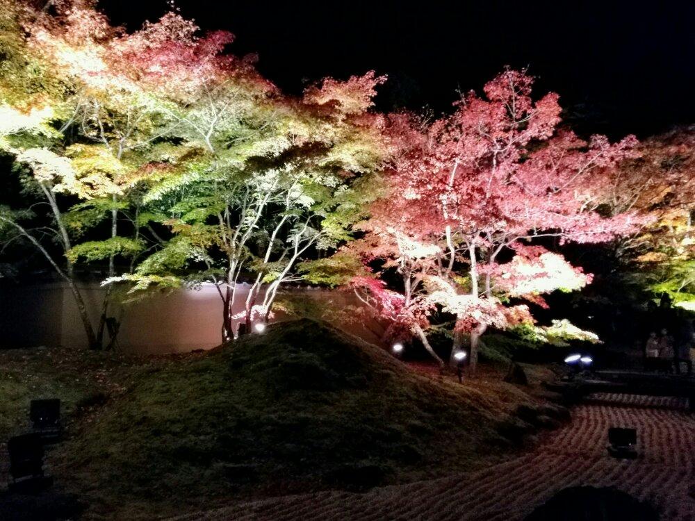 円通院 紅葉 ライトアップ