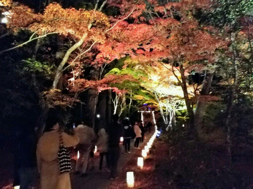 松島円通院の紅葉ライトアップの行列