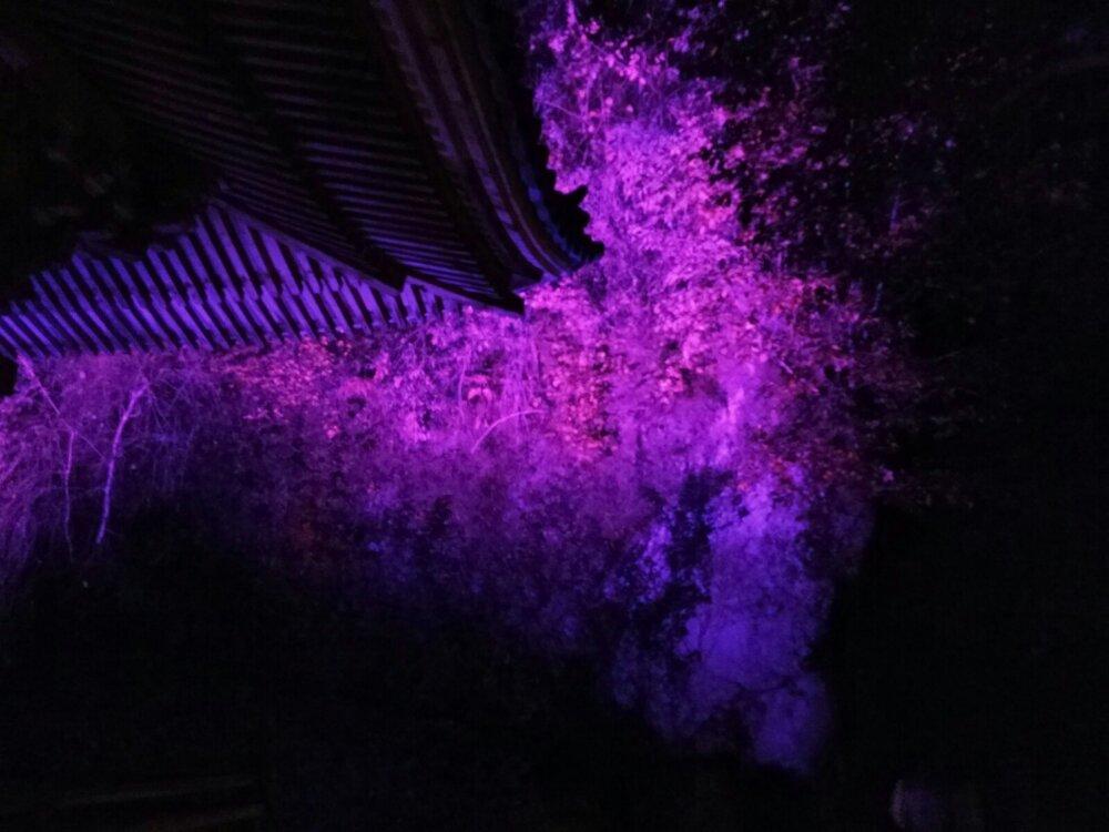 紫色に照らされる三慧殿の裏山