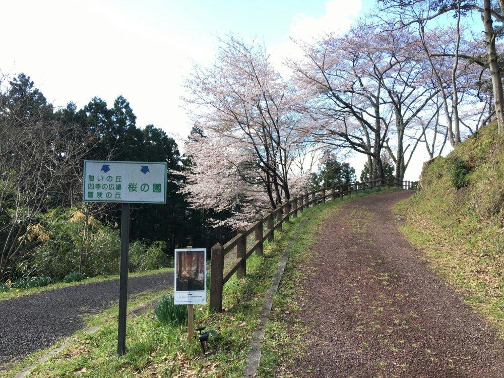 桜の園への道